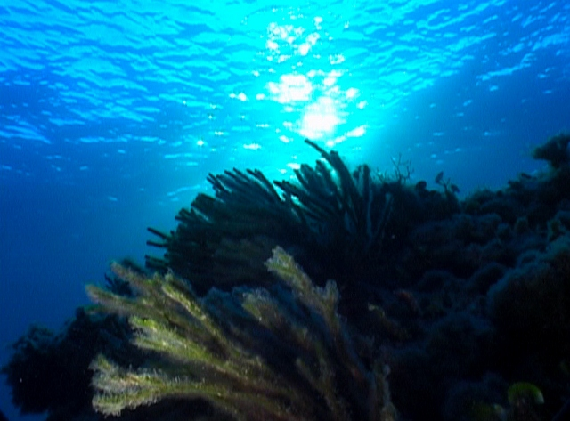 Diving e Snorkeling all'Asinara